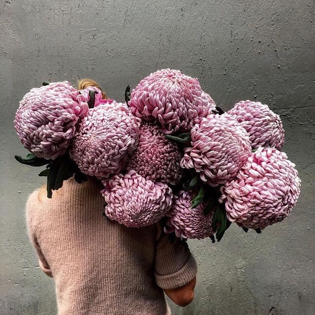 Brate de floriwishingchrisantemumfallautumnflowersmelancholia