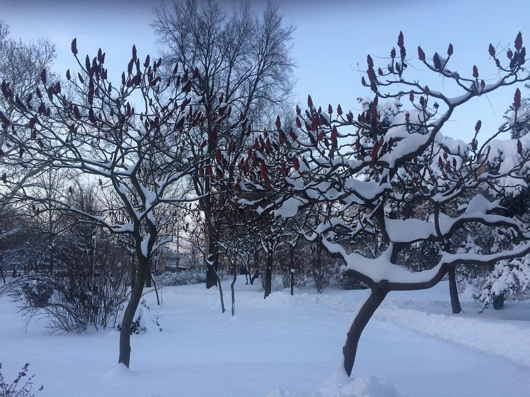 Winter time ilovesnow winterinthepark parculcircului treesinwintertime treestagram sunset